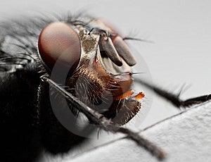 Fly Eyes Stock Image - Image: 9783651