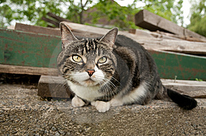 A Nice Cat Starring At The Camera Royalty Free Stock Photography - Image: 9786427