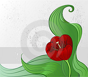 Stylish Tulip Stock Photo - Image: 9794720