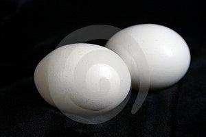 Quite A Pair Stock Image - Image: 985011