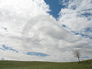 Summer Landscape With Alone Tree And Clouds Stock Photo - Image: 986330