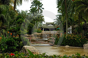 Garden Free Stock Photography