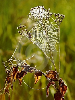 Spiders Cobweb On A Meadow At Sunrise Stock Photo - Image: 9807140