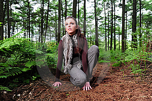 Crouching Down In A Forest Royalty Free Stock Images - Image: 9808539