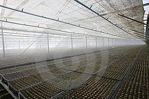 Eucalyptus Seedling Stock Photo - Image: 9809030