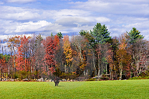 Bull In A Field In Autumn Royalty Free Stock Images - Image: 9809729