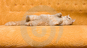Cat On The Sofa Stock Images - Image: 9814434