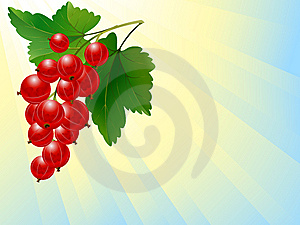Red Currant Royalty Free Stock Photos - Image: 9814978
