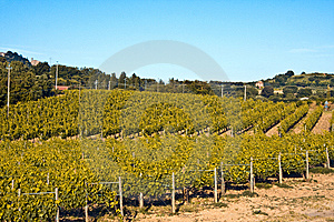 Vineyards Stock Images - Image: 9818184