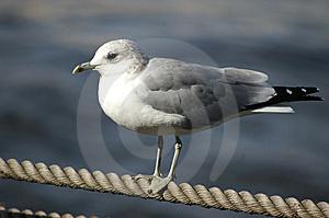 Seagull Stock Photography - Image: 9820742