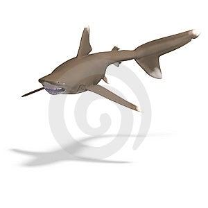 Oceanic Whitetip Shark Royalty Free Stock Photography - Image: 9826377