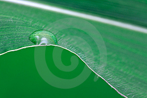 Big Leaf - Textured Structure Background Royalty Free Stock Photo - Image: 9826945
