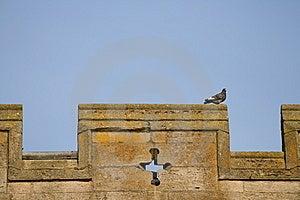 Parapet Pigeon Stock Images - Image: 9833694