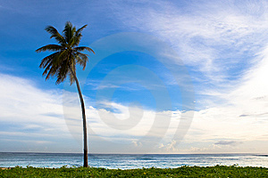 Palm On The Beach Island Royalty Free Stock Image - Image: 9836246