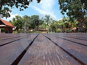 Hardwood Plank Flooring Greenery Royalty Free Stock Photos - Image: 9839738