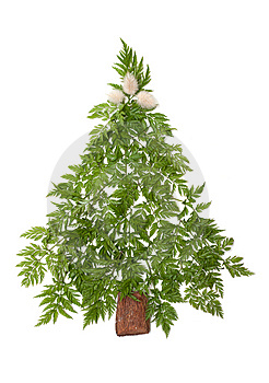 Decorative Cristmas Spruce Royalty Free Stock Images - Image: 9840919