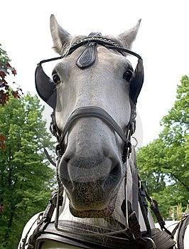 Horse Muzzle Stock Photography - Image: 9852252
