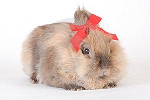 Brown-white Bunny Stock Image - Image: 9853301