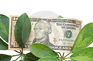 Green Leaves And Dollar On A White Background Stock Image - Image: 9854501