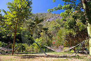 Hammock On Tropic Lawn Royalty Free Stock Images - Image: 9854689