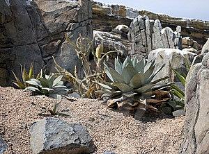 Desert Landscape Royalty Free Stock Image - Image: 9857756