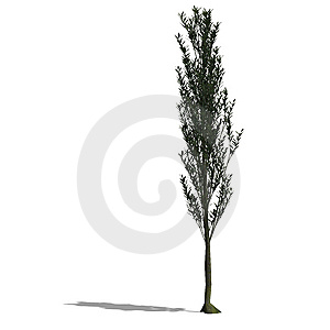 3D Render Of A Tree With Shadow And Clipping Path Royalty Free Stock Photo - Image: 9859425