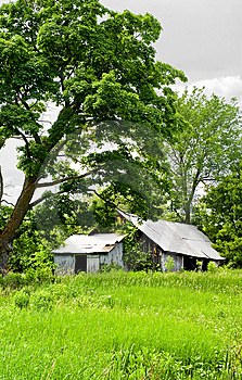 Run Down Barn In The Overgrowth Royalty Free Stock Images - Image: 9870299