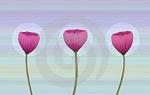 Retro-styled Poppy Flowers Stock Photos - Image: 9891383