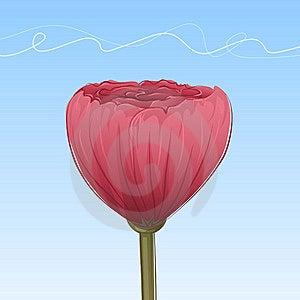 Hand-drawn Poppy Stock Photos - Image: 9891403