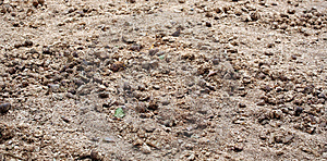 Animal Manure Stock Image - Image: 997531