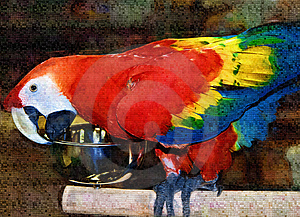 Scarlet Macaw Painting Stock Photography - Image: 997642