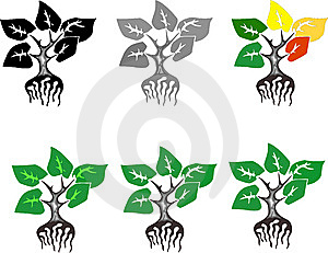 Plant Stock Image - Image: 9902671