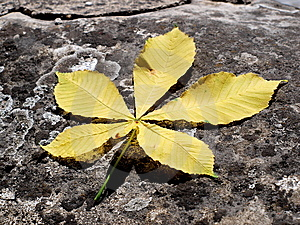 Yellow Leaf Royalty Free Stock Photography - Image: 9904557