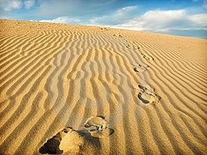 Sahara Stock Photography - Image: 9908302