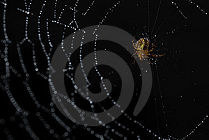 Spider In Its Web Covered In Morning Dew Stock Images - Image: 9911114