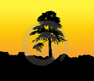 Tall Silhouetted Tree Royalty Free Stock Photo - Image: 9911395