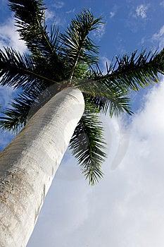 Palm Tree Royalty Free Stock Photo - Image: 9911465