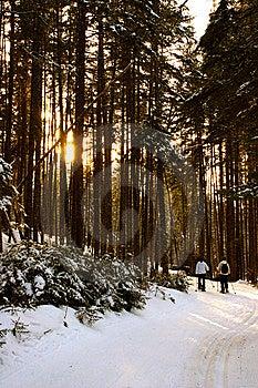 Bretton Woods, New Hampshire Stock Photo - Image: 9916960
