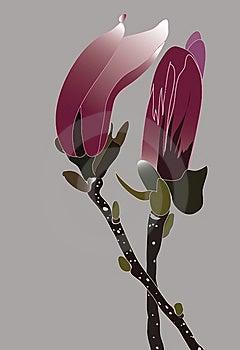 Magnolia Buds Stock Image - Image: 9922241