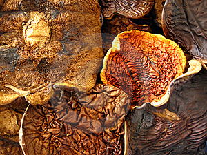 Dried Mushrooms Composition Royalty Free Stock Photo - Image: 9925845