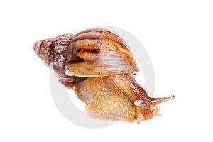 Snail Stock Photos - Image: 9926083