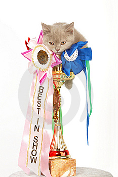Kitten In A Large Golden Trophy Royalty Free Stock Photography - Image: 9928257