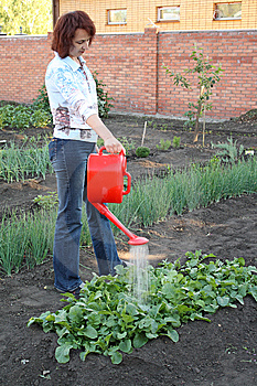 Having Watered Beds With A Radish Stock Photos - Image: 9930893