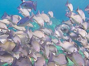 Underwater School Of Fish Stock Photo - Image: 9935710