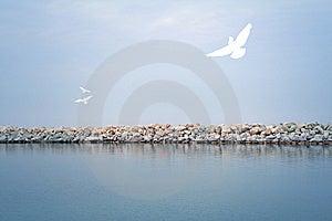 Sea Landscape Royalty Free Stock Photo - Image: 9950585