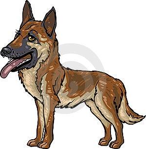 Dog Breeds: German Shepherd Stock Photo - Image: 9959160