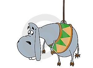 Donkey On A Rope Royalty Free Stock Images - Image: 9964809
