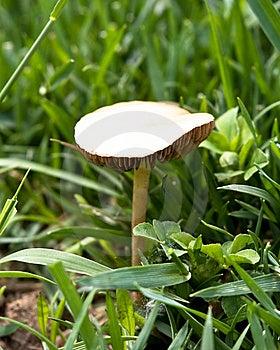 Mushroom In Wild Royalty Free Stock Photos - Image: 9965598
