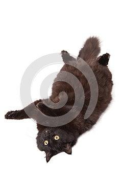 Lying Black Cat Isolated Stock Images - Image: 9974964