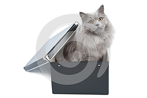 British Cat In Black Box Isolated Royalty Free Stock Photos - Image: 9975378